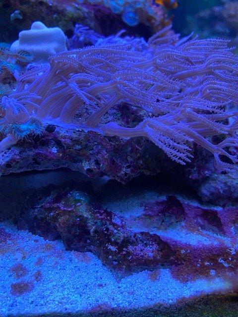 Coral 1.jpg