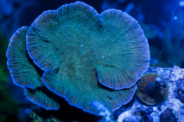 Coral-11.jpg