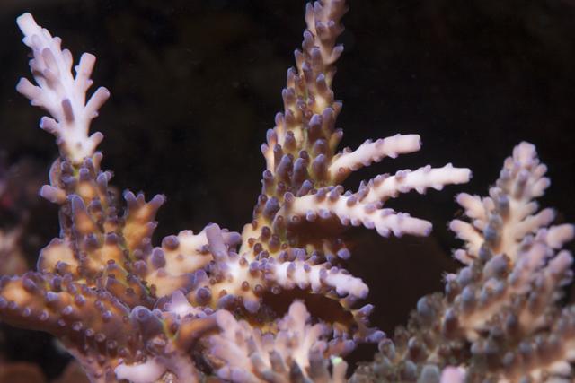 Coral-22.jpg