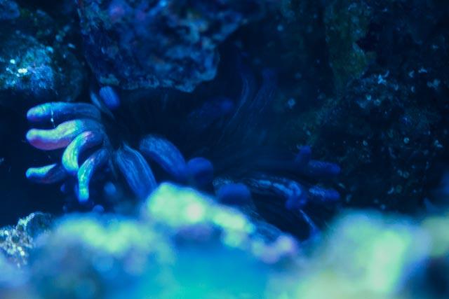 CoralPhoto-1-2.jpg