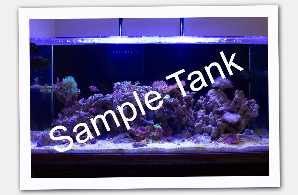 TankSpotLight.jpg